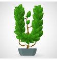 Green foliage houseplant alphabet vector image vector image