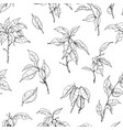 Hand drawn ficus branch pattern
