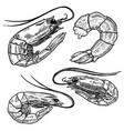set shrimps for poster menu banner emblem sign vector image
