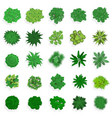 trees top view green plants bushes shrubs and vector image vector image