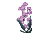 tropical exotic violet orchid flower branch vector image vector image