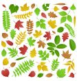 collection of autumn leaves vector image