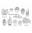 decorative potted succulents set of hand vector image