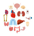 internal organs flat icons vector image