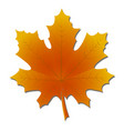 maple leaf in autumnyellow and orange vector image