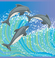 a group of dolphins vector image