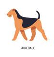airedale bingley or waterside terrier beautiful vector image vector image