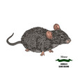 hand drawn mouse or rat animal colored sketch vector image
