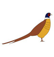 pheasant bird on white background vector image