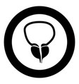 the prostate gland and bladder icon black color vector image