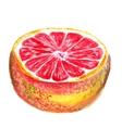 half of grapefruit vector image vector image