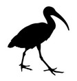 sacred ibis silhouette 001 vector image