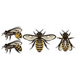 set different bees design elements colored vector image vector image