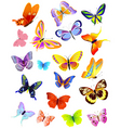 set of different butterflies vector image vector image