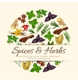 Spices and herbs poster vector image vector image