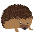 cute hedgehog vector image vector image