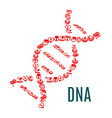 dna symbol of hearts and blood vector image vector image
