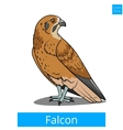 Falcon bird learn birds educational game vector image vector image