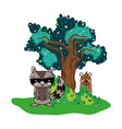 raccoon and bear animals with tree and bushes vector image vector image