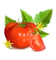 Red ripe tomatoes vector image vector image
