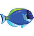 tropical fish acanthurus leucosternon vector image