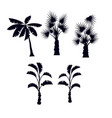 tropical palm trees silhouette set vector image