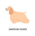 american cocker spaniel adorable purebred vector image vector image