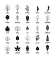 leaf icons set simple style vector image