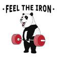 panda weightlifter vector image