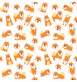 pomeranian seamless pattern vector image vector image