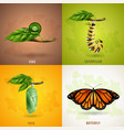 butterfly 2x2 design concept vector image vector image