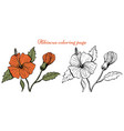 hibiscus flower coloring page vector image