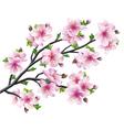 Japanese tree sakura cherry blossom vector image vector image