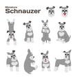 miniature schnauzer seamless pattern vector image vector image