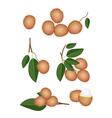 Set of Fresh Ripe and Juicy Rambutans vector image vector image