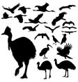 australian birds silhouettes vector image vector image