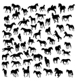 Big collection of different horses silhouettes