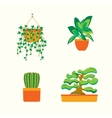 Green Plants for Home or Office vector image vector image
