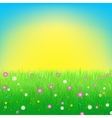 Meadow with flowers background vector image vector image