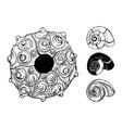 sea shells and sea urchin shell vector image