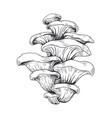 hand drawn honey mushrooms vegetarian ingredient vector image vector image