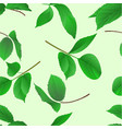 seamless texture branches of roses with leaves vector image vector image