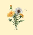 watercolor dandelion blowball vector image vector image