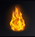 fire isolated on transparent background vector image