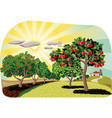 orchard with apple trees vector image vector image