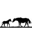 silhouettes of mare and her foal vector image vector image
