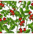 dogrose seamless pattern white background vector image