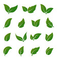 green leaf icons spring leaves ecology vector image vector image