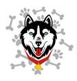 husky head dog bone paw design vector image vector image