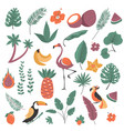 tropical plants and birds exotic flora and fauna vector image